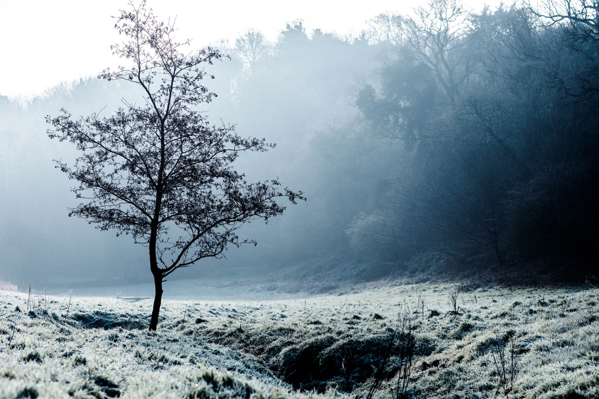 Frosty scene at St Peter's Valley