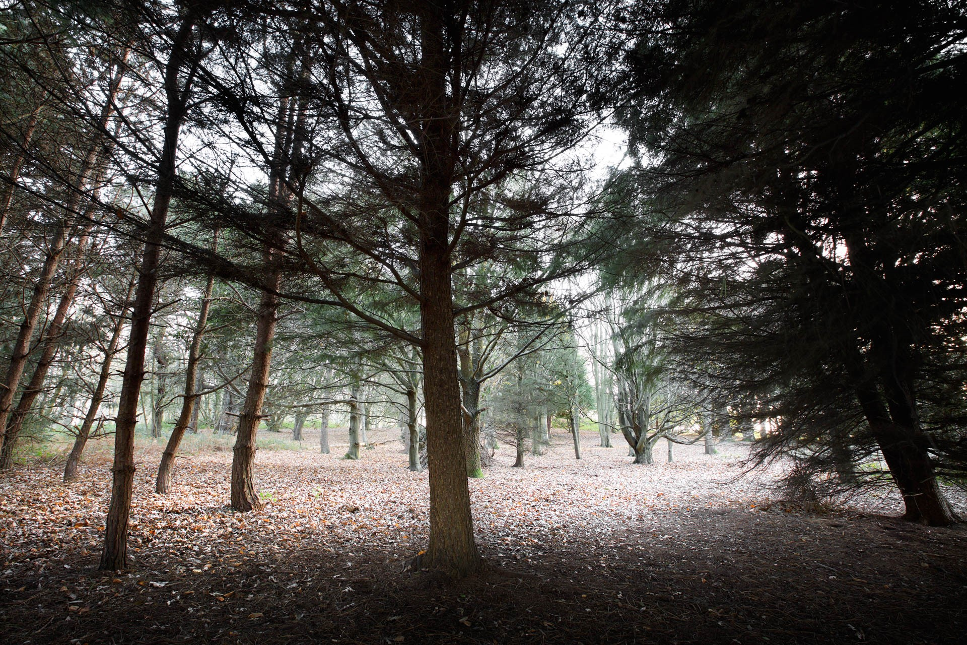 Winter woodland at Noirmont