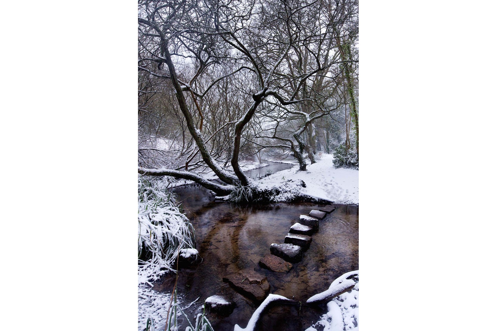 Stepping Stones to a winter wonderland at St Catherine's Woods